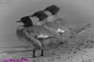 Vögel_2021_5