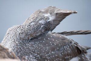 Vögel_2021_4